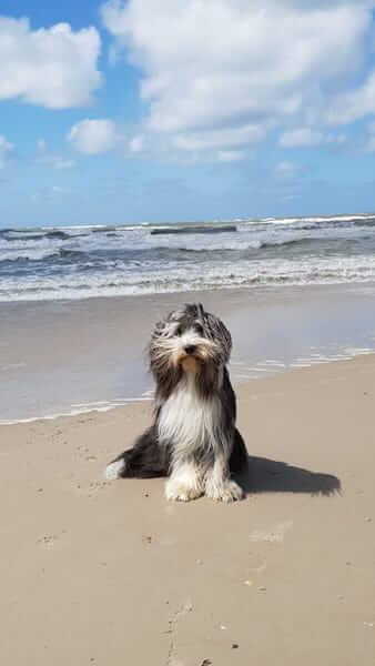 Hund Findus in Dänemark